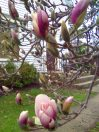 photos taken by gardenia c hung 013