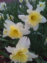 photos taken by gardenia c hung 150